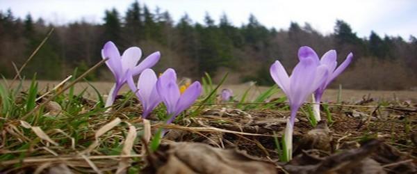flora-divcibare